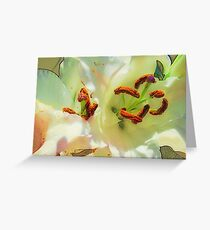 Lily Transformed Greeting Card