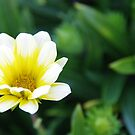 The Simplistic Beauty of Nature by R-Walker