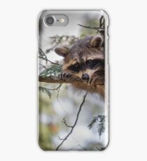 raccoon hiding in a tree iPhone Case/Skin