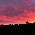 Sunrise Spectacular by Amy Dee
