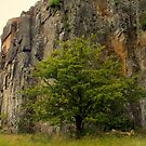 The tree that rocks. by Livvy Young