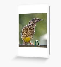 Australian Wattle Bird. Greeting Card
