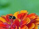 Black Bee by FrankieCat