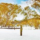 Cascade Hut, Kosciuszko National Park, New South Wales, Australia by Michael Boniwell