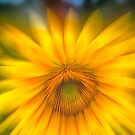 Sunflower with Blue Sky by KellyHeaton