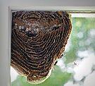 Inside of a Hornets Nest by FrankieCat