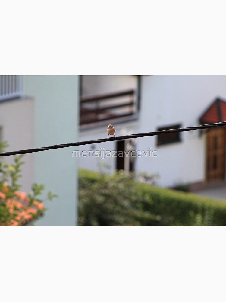 Bird on the wire by mensijazavcevic