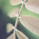 Seven by Katayoonphotos