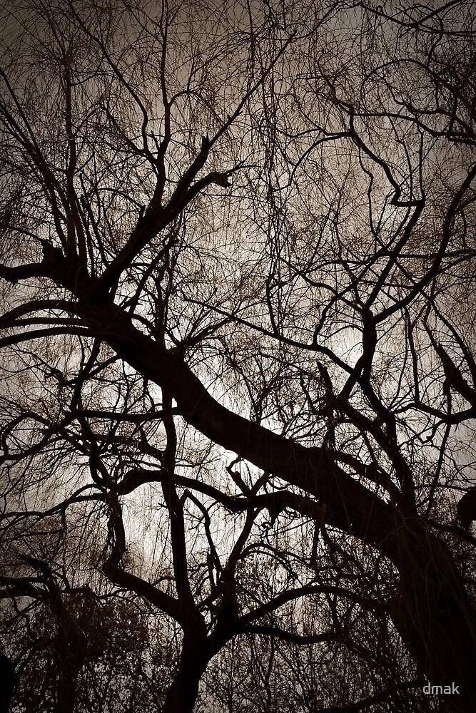 Dark by dmak
