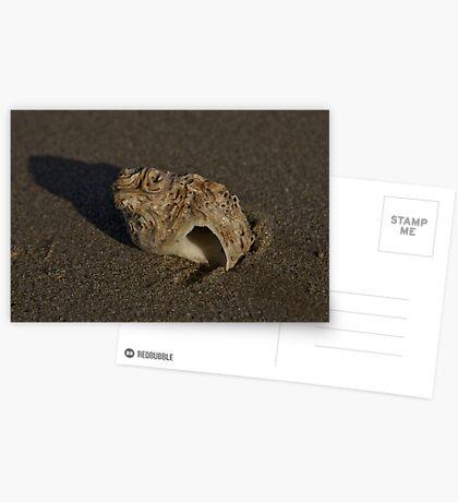 Weathered Whelk on Fahan Beach Greeting Card