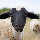 Halbe schwarze Schafe von Madcowontherun