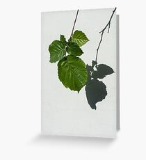 Sophisticated Shadows - Glossy Hazelnut Leaves on White Stucco - Vertical View Down Right Greeting Card