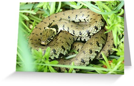 Snake in the grass!! by JanSmithPics