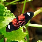 The Year Of The Butterfly! by RickDavis