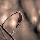 Surface of Decay by Avantgarda