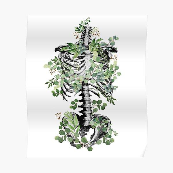 Botanical anatomy, rib cage, pelvis, eucalyptus leaves floral skeleton Poster