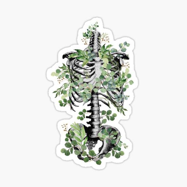 Botanical anatomy, rib cage, pelvis, eucalyptus leaves floral skeleton Sticker