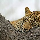 A classic leopard pose by jozi1