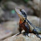 Water dragon, Blue Mountains by Erland Howden
