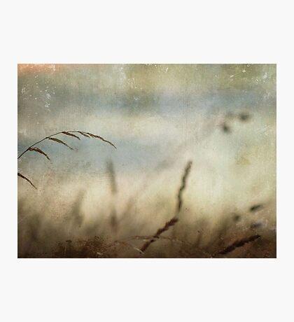 wild grasses 5 Photographic Print