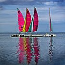 Cat' Voiles by cclaude