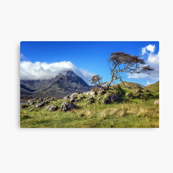 The Torrin Tree Leinwanddruck
