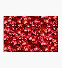 Warm Floral Collage Print Photographic Print