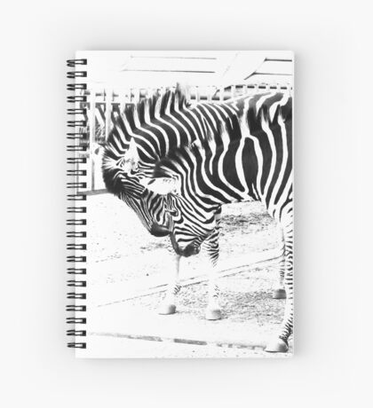 Zebras in high key Spiral Notebook