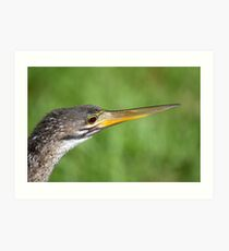 Anhinga in the Everglades Art Print