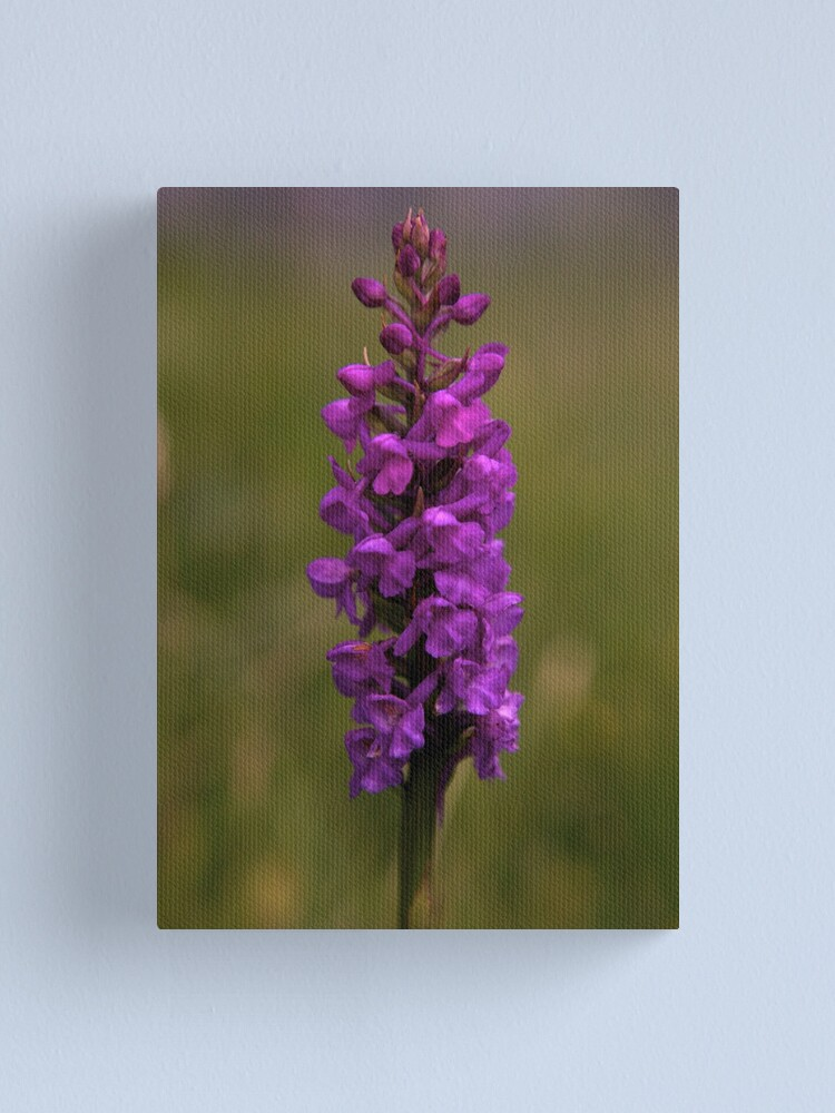 Alternate view of Fragrant Orchid, Dun Eochla, Inishmore Canvas Print