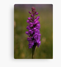 Fragrant Orchid, Dun Eochla, Inishmore Canvas Print