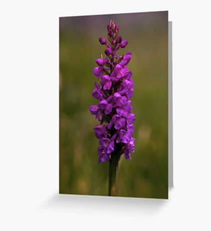 Fragrant Orchid, Dun Eochla, Inishmore Greeting Card