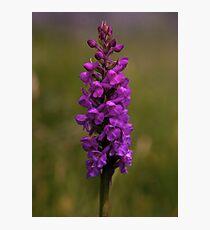 Fragrant Orchid, Dun Eochla, Inishmore Photographic Print