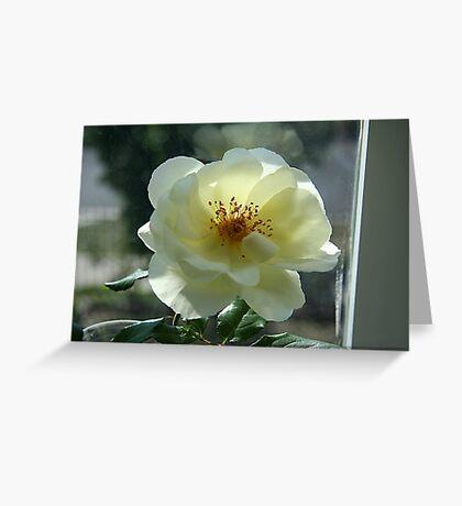 Pamela's rose Greeting Card