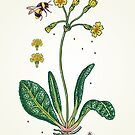 yellow cowslip and bee by smalldrawing