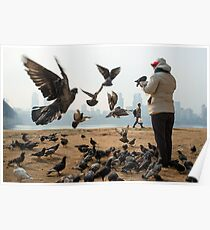 Feeding Pigeons in Seoul Poster