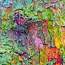 All the Colours of Lichen by Stephen Frost
