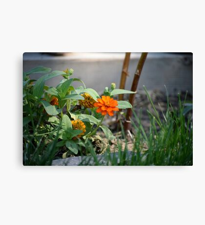 First Summer's Green Thumb Canvas Print
