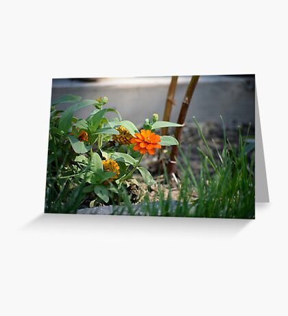 First Summer's Green Thumb Greeting Card
