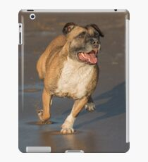 Staffordshire bull terrier running iPad Case/Skin