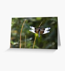Widow Skimmer on a stick  Greeting Card