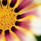 Fresh as a Daisy by Liz Grandmaison