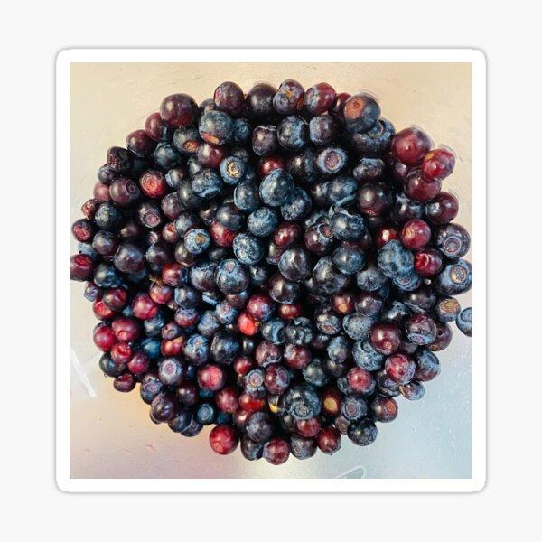 Huckleberry Harvest Sticker