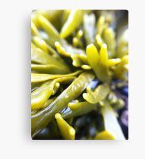 Macro Seaweed Canvas Print