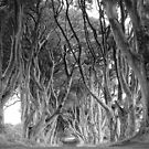 Dark Hedges- Game of thrones by DES PALMER