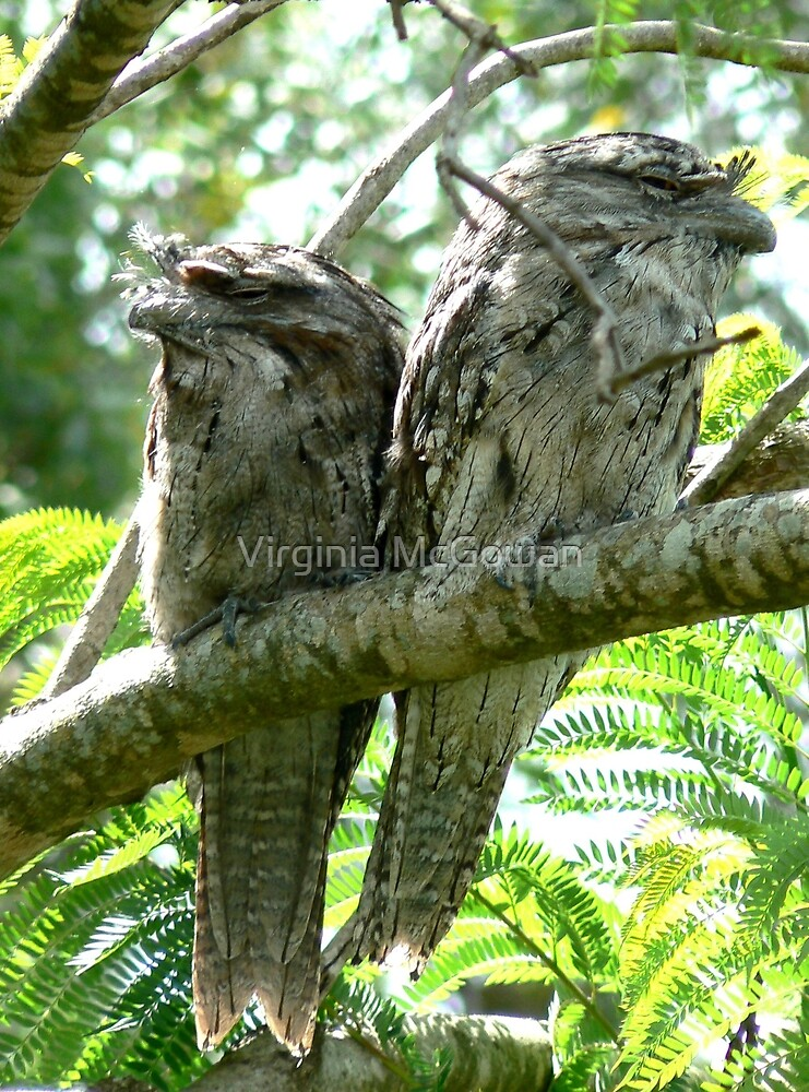 We were minding our own business~~~~~~~ there's that $%^&  camera again! by Virginia McGowan