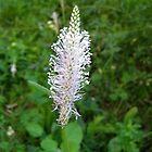 A small white wildflower by Ana Belaj