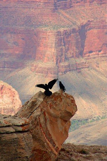 Grand Canyon Ravens by Daniel Owens