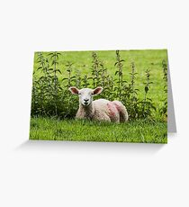 Lamb resting with the nettles Greeting Card