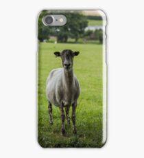 Ewe`s looking iPhone Case/Skin